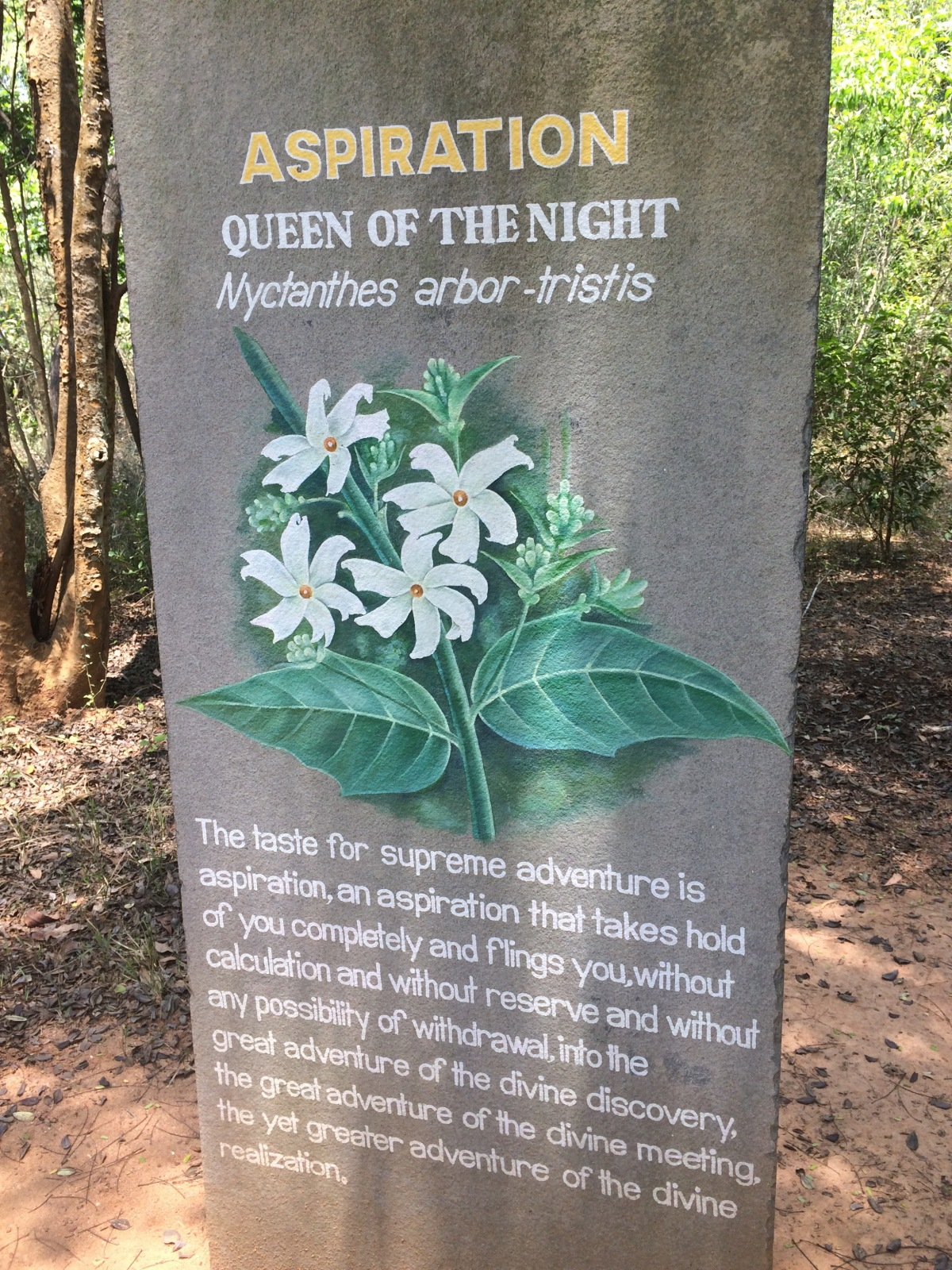 Auroville, India: a hippy dreamunrealised